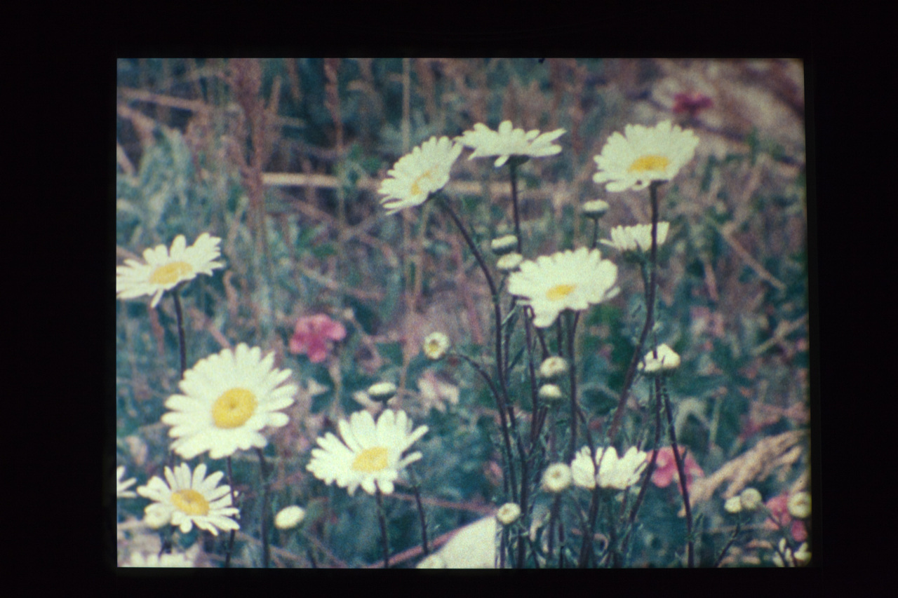 Agnes Martin, Gabriel, 1976, 16mm film, 2 reels, Answer Print Negative printing rolls, total running time: 78 minutes, VIDEO, No. 54668, format of original photography: hi-res tiff [film stills]